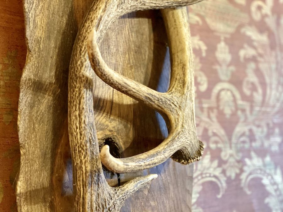 Richard's handmade antler wall art